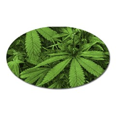 Marijuana Plants Pattern Oval Magnet