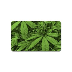 Marijuana Plants Pattern Magnet (name Card)