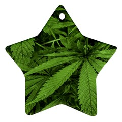 Marijuana Plants Pattern Star Ornament (two Sides)