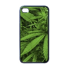 Marijuana Plants Pattern Apple Iphone 4 Case (black)