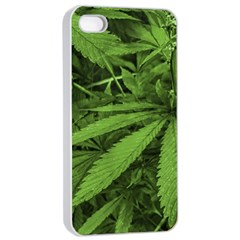 Marijuana Plants Pattern Apple Iphone 4/4s Seamless Case (white)