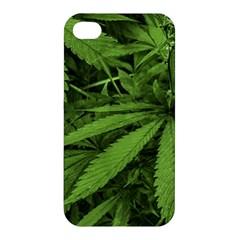 Marijuana Plants Pattern Apple Iphone 4/4s Hardshell Case