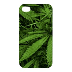 Marijuana Plants Pattern Apple Iphone 4/4s Premium Hardshell Case