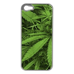 Marijuana Plants Pattern Apple Iphone 5 Case (silver)