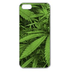 Marijuana Plants Pattern Apple Seamless Iphone 5 Case (clear)