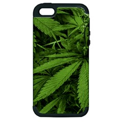 Marijuana Plants Pattern Apple Iphone 5 Hardshell Case (pc+silicone)