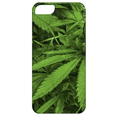Marijuana Plants Pattern Apple Iphone 5 Classic Hardshell Case