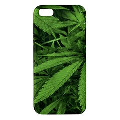 Marijuana Plants Pattern Iphone 5s/ Se Premium Hardshell Case