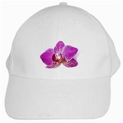 Lilac Phalaenopsis Aquarel  Watercolor Art Painting White Cap