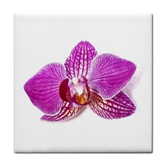 Lilac Phalaenopsis Aquarel  Watercolor Art Painting Tile Coasters