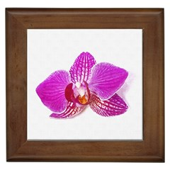 Lilac Phalaenopsis Flower, Floral Oil Painting Art Framed Tiles