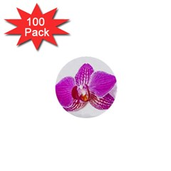 Lilac Phalaenopsis Flower, Floral Oil Painting Art 1  Mini Buttons (100 Pack)