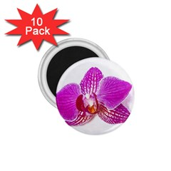Lilac Phalaenopsis Flower, Floral Oil Painting Art 1 75  Magnets (10 Pack)
