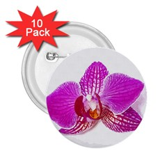 Lilac Phalaenopsis Flower, Floral Oil Painting Art 2 25  Buttons (10 Pack)
