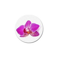 Lilac Phalaenopsis Flower, Floral Oil Painting Art Golf Ball Marker (10 Pack)