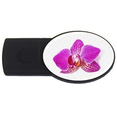Lilac Phalaenopsis Flower, Floral Oil Painting Art Usb Flash Drive Oval (2 Gb)
