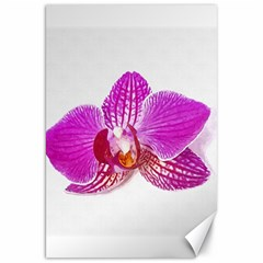 Lilac Phalaenopsis Flower, Floral Oil Painting Art Canvas 20  X 30