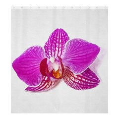 Lilac Phalaenopsis Flower, Floral Oil Painting Art Shower Curtain 66  X 72  (large)