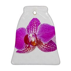 Lilac Phalaenopsis Flower, Floral Oil Painting Art Bell Ornament (two Sides)