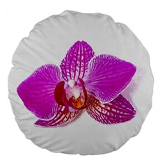 Lilac Phalaenopsis Flower, Floral Oil Painting Art Large 18  Premium Flano Round Cushions