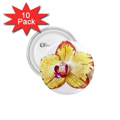 Yellow Phalaenopsis Flower, Floral Aquarel Watercolor Painting Art 1 75  Buttons (10 Pack)