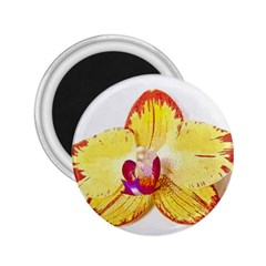 Phalaenopsis Yellow Flower, Floral Oil Painting Art 2 25  Magnets