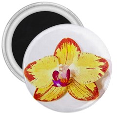 Phalaenopsis Yellow Flower, Floral Oil Painting Art 3  Magnets