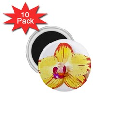 Phalaenopsis Yellow Flower, Floral Oil Painting Art 1 75  Magnets (10 Pack)