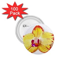 Phalaenopsis Yellow Flower, Floral Oil Painting Art 1 75  Buttons (100 Pack)