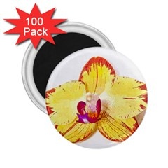Phalaenopsis Yellow Flower, Floral Oil Painting Art 2 25  Magnets (100 Pack)