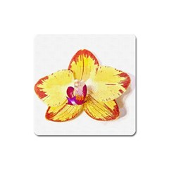 Phalaenopsis Yellow Flower, Floral Oil Painting Art Square Magnet
