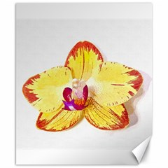 Phalaenopsis Yellow Flower, Floral Oil Painting Art Canvas 8  X 10