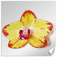 Phalaenopsis Yellow Flower, Floral Oil Painting Art Canvas 20  X 20