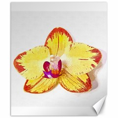 Phalaenopsis Yellow Flower, Floral Oil Painting Art Canvas 20  X 24