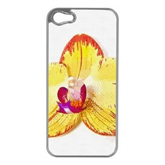Phalaenopsis Yellow Flower, Floral Oil Painting Art Apple Iphone 5 Case (silver)