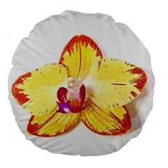 Phalaenopsis Yellow Flower, Floral Oil Painting Art Large 18  Premium Flano Round Cushions