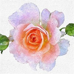 Pink Rose Flower, Floral Oil Painting Art Magic Photo Cubes