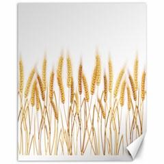 Wheat Plants Canvas 11  X 14