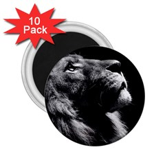 Male Lion Face 2 25  Magnets (10 Pack)