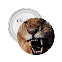 Male Lion Angry 2 25  Buttons