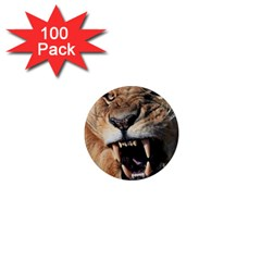 Male Lion Angry 1  Mini Magnets (100 Pack)