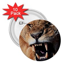 Male Lion Angry 2 25  Buttons (10 Pack)