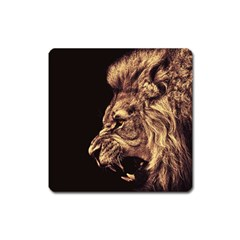 Angry Male Lion Gold Square Magnet