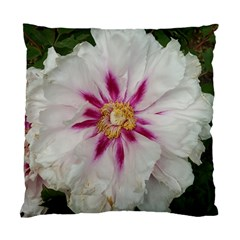 Floral Soft Pink Flower Photography Peony Rose Standard Cushion Case (two Sides)