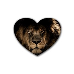 African Lion Mane Close Eyes Heart Coaster (4 Pack)
