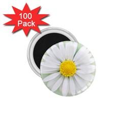 Art Daisy Flower Art Flower Deco 1 75  Magnets (100 Pack)