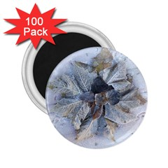 Winter Frost Ice Sheet Leaves 2 25  Magnets (100 Pack)