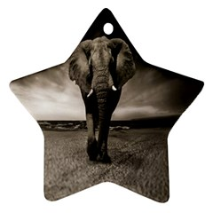 Elephant Black And White Animal Ornament (star)