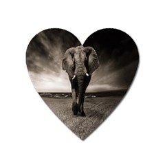 Elephant Black And White Animal Heart Magnet