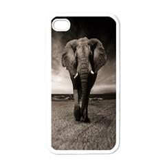 Elephant Black And White Animal Apple Iphone 4 Case (white)